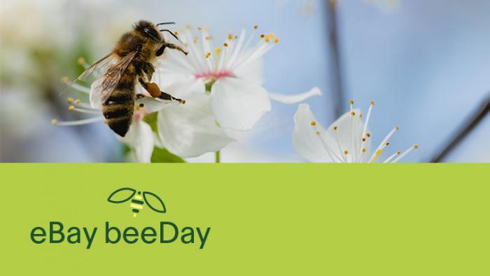 eBay setzt sich zum Weltbienentag am 20. Mai für Wildbienen ein